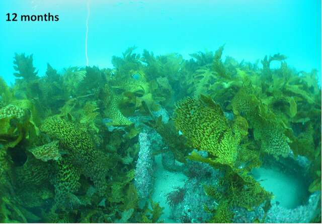 Fish reef domes a boon for environment, recreational fishing