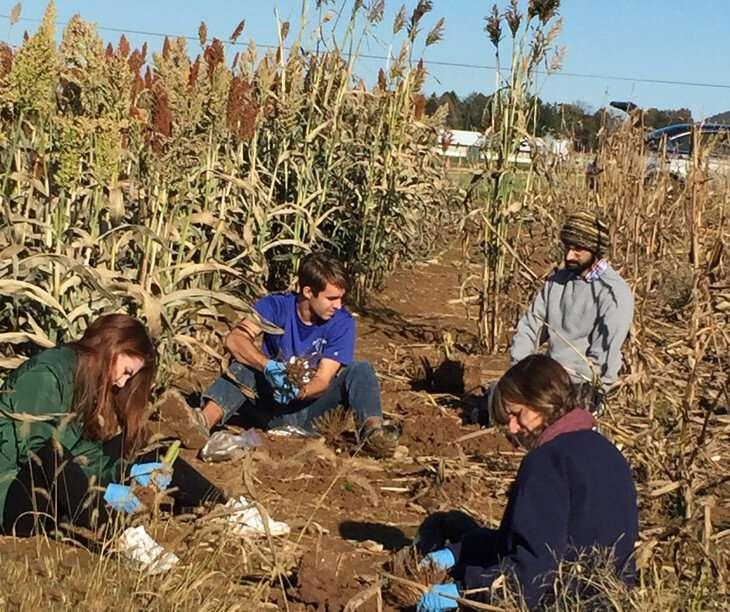 La presencia de flavonoides en las raíces del sorgo puede conducir a cultivos resistentes a las heladas.