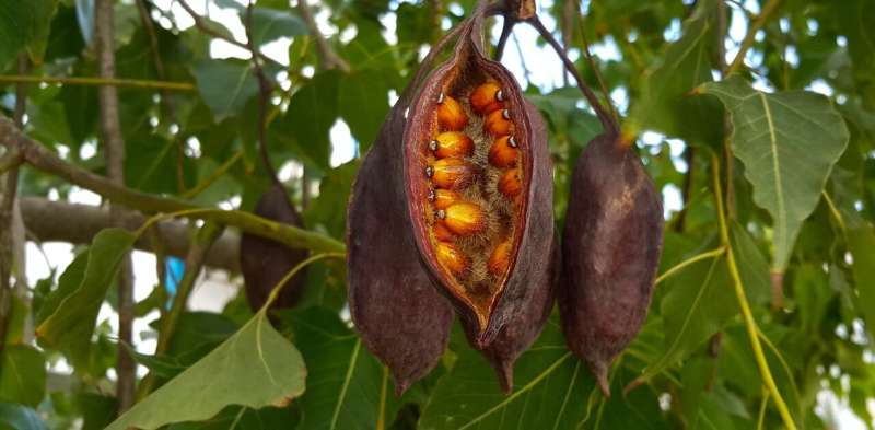Food, tools and medicine: 5 native plants that illuminate deep Aboriginal knowledge