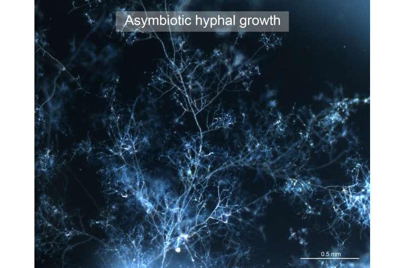 For asymbiotic growth of arbuscular mycorrhizal fungi, feed them fatty acids