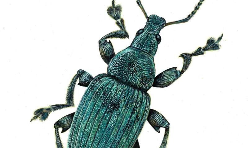 Fossil record analysis hints at evolutionary origins of insects' structural colours