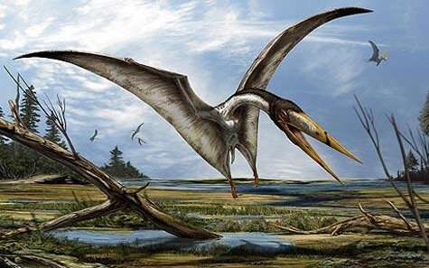 Fossil shark turns in to mystery pterosaur