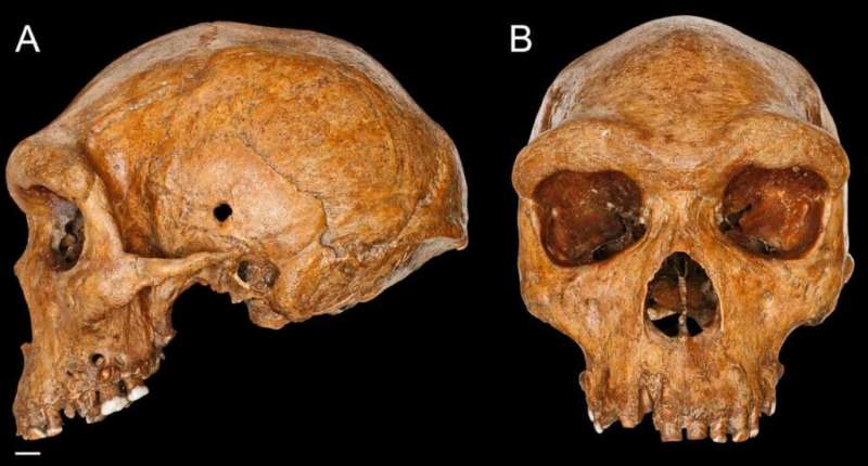 Fossil skull casts doubt over modern human ancestry