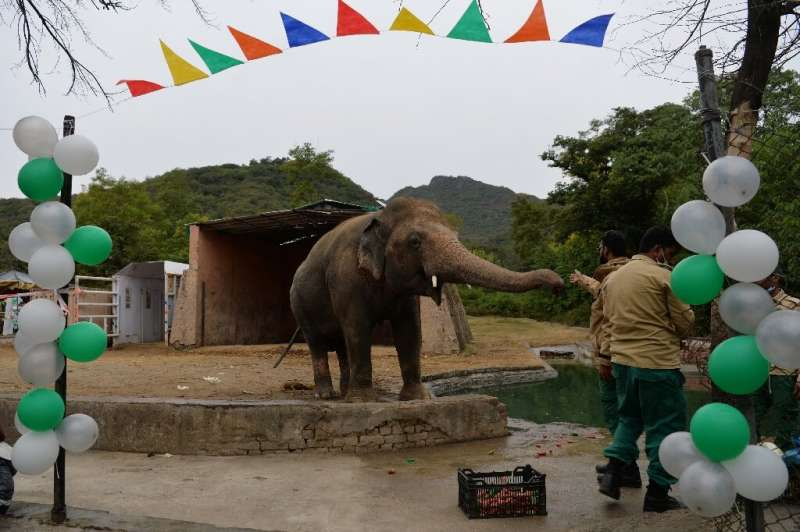Friends threw a farewell party for Kaavan, Pakistan's only Asian elephant,before it heads to Cambodia