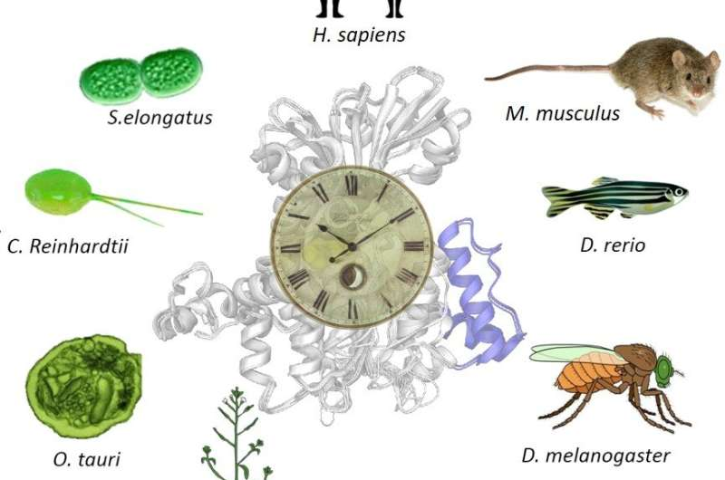 From bacteria to you: The biological reactions that sustain our rhythms