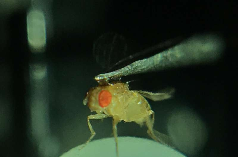 Fruit flies respond to rapid changes in the visual environment thanks to luminance-sensitive lamina neurons