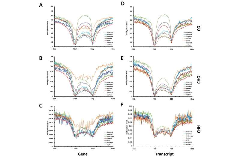 Gene fate after single whole-genome duplication in angiosperm