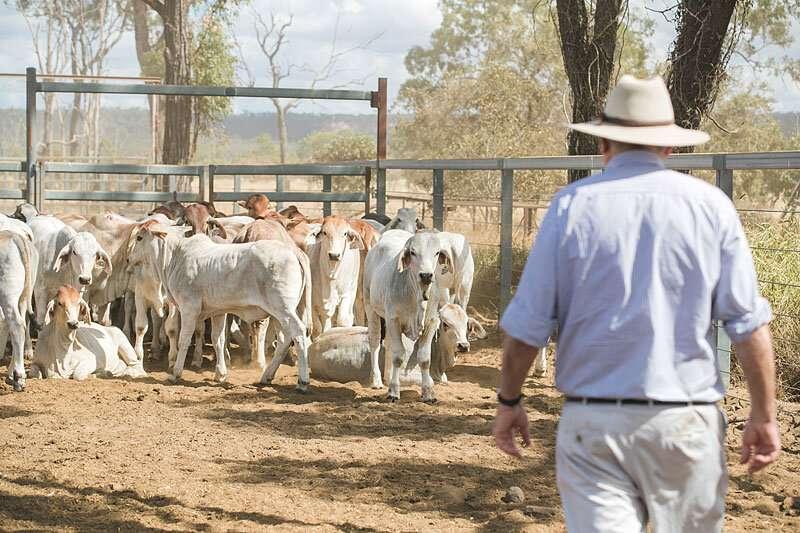 Genetic link between cattle temperament and autism