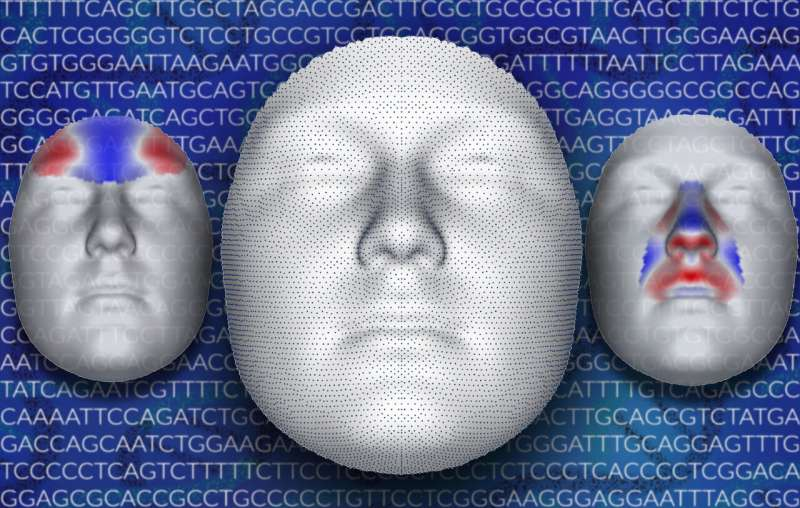 Genetics of human face begin to reveal underlying profile