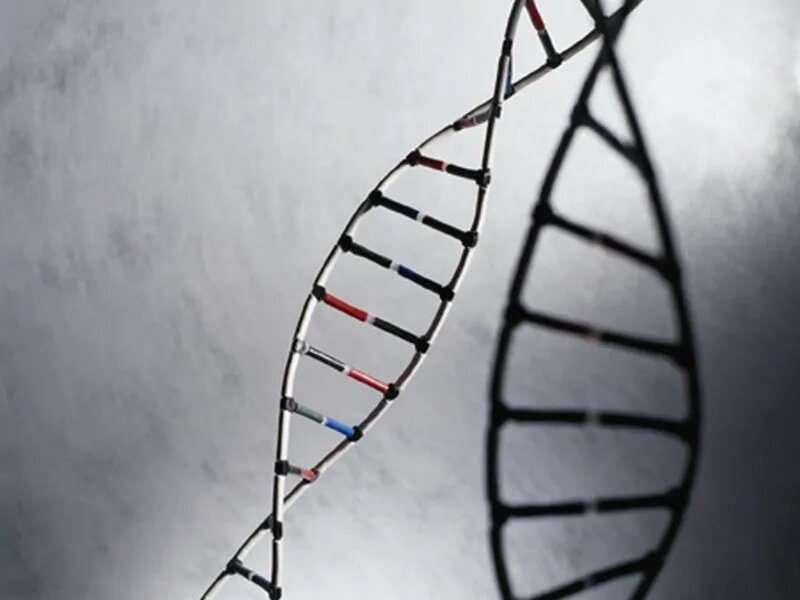 Genetic testing does not enhance heart disease risk prediction