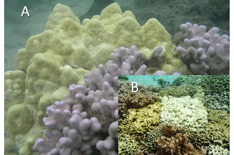 Genomic data 'catches corals in the act' of speciation and adaptation