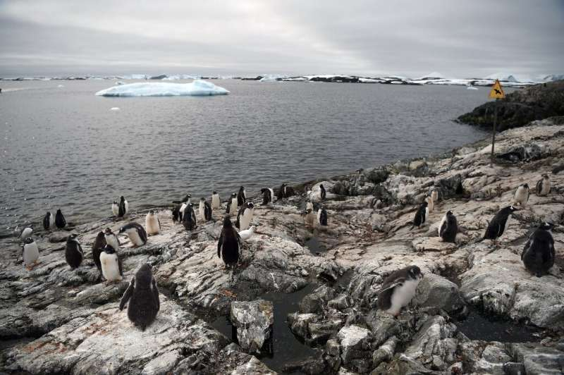 Gentoo penguins will be the Ukrainians' near neighbours for the next 12 months at the Vernadsky research base