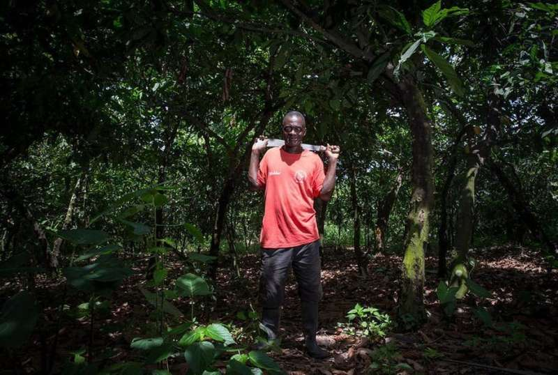 Ghana's cocoa production relies on the environment, which needs better protection