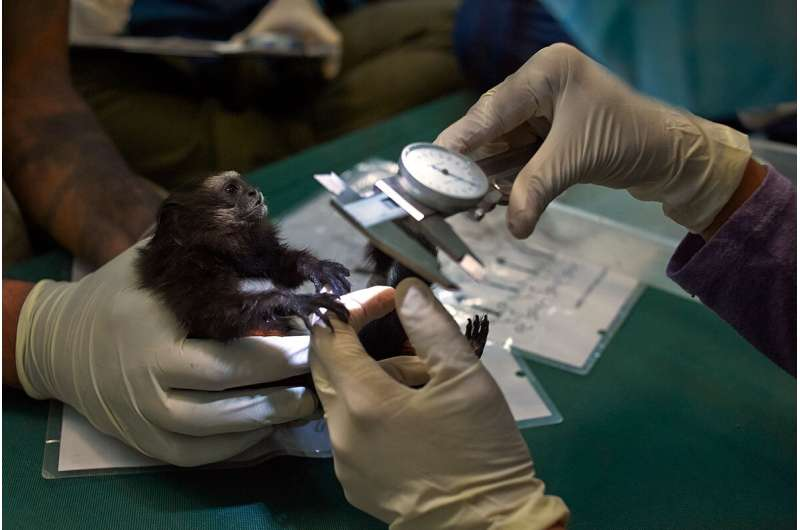 Global wildlife surveillance could provide early warning for next pandemic