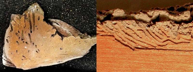 Graduate student names new trace fossil discovered during coursework