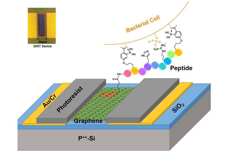 Graphene underpins a new platform to selectively ID deadly strains of bacteria