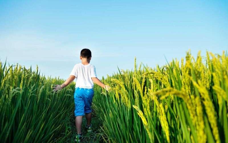 Green revolution saved over 100 million infant lives in developing world