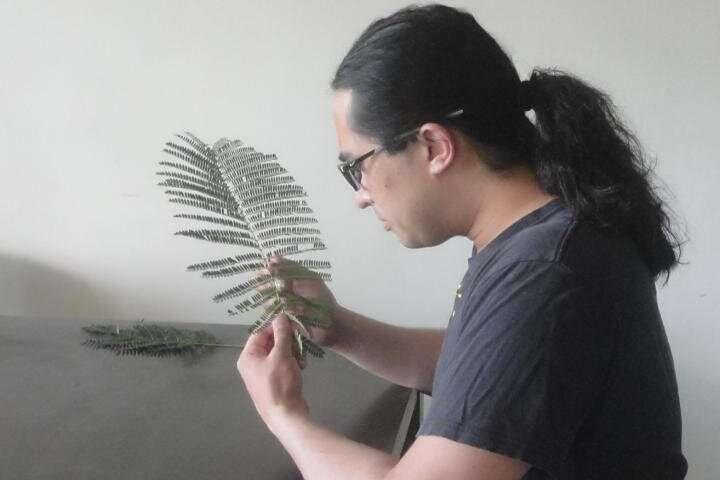 Guam's most endangered tree species reveals universal biological concept