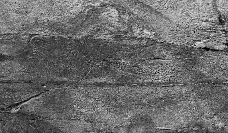 Half billion-year-old 'social network' observed in early animals