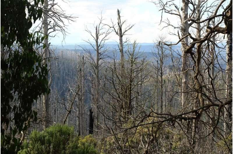 Halt post-disturbance logging in forests