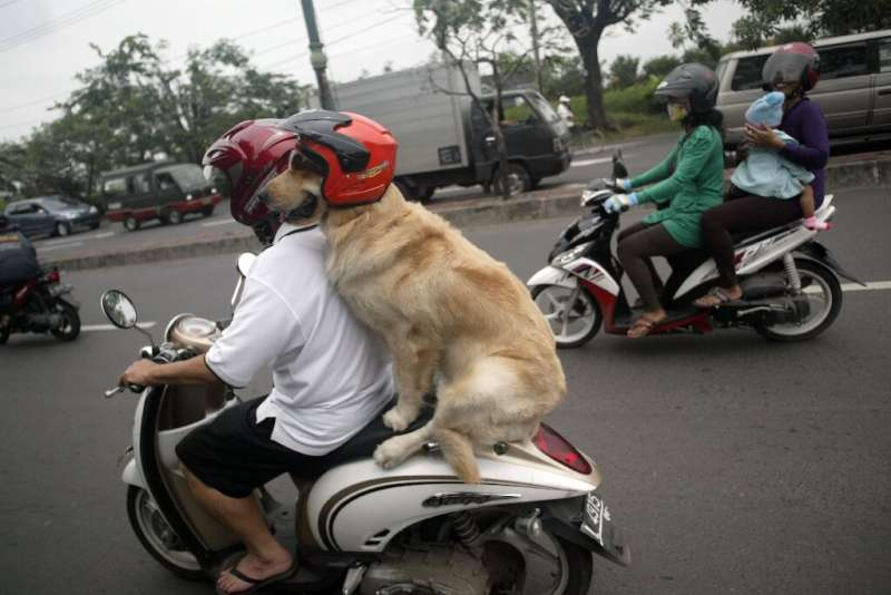 Handoko Njotokusumo and Ace ride through traffic during their weekend joy ride on a motorcycle in Surabaya, Indonesia