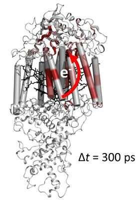 High speed filming reveals protein changes during photosynthesis
