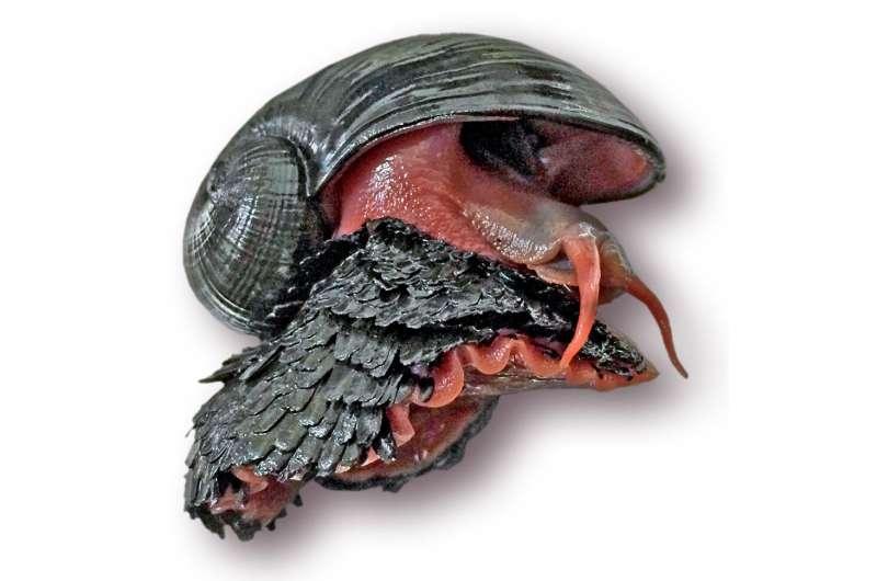 HKUST researchers unlock genomic secrets of scaly-foot snail