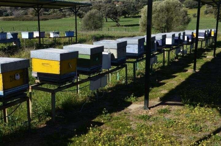 Honeybees reveal environmental pollution in their surroundings