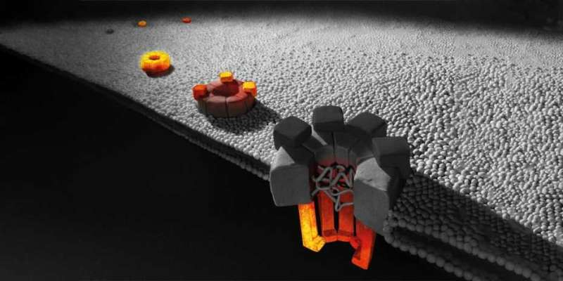How a large protein complex assembles in a cell