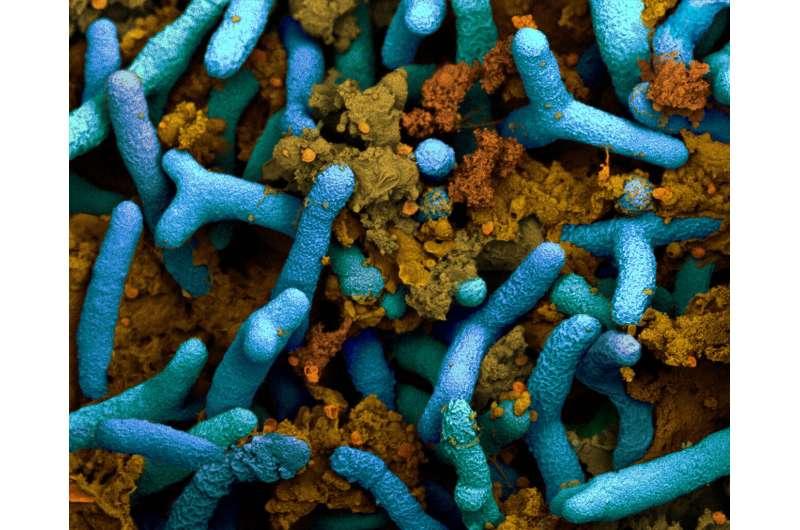 How bacteria fertilize soya