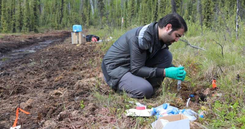 How changes in ancient soil microbes could predict the future of the Arctic