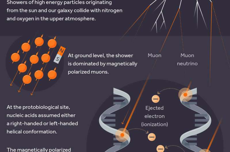 How cosmic rays may have shaped life