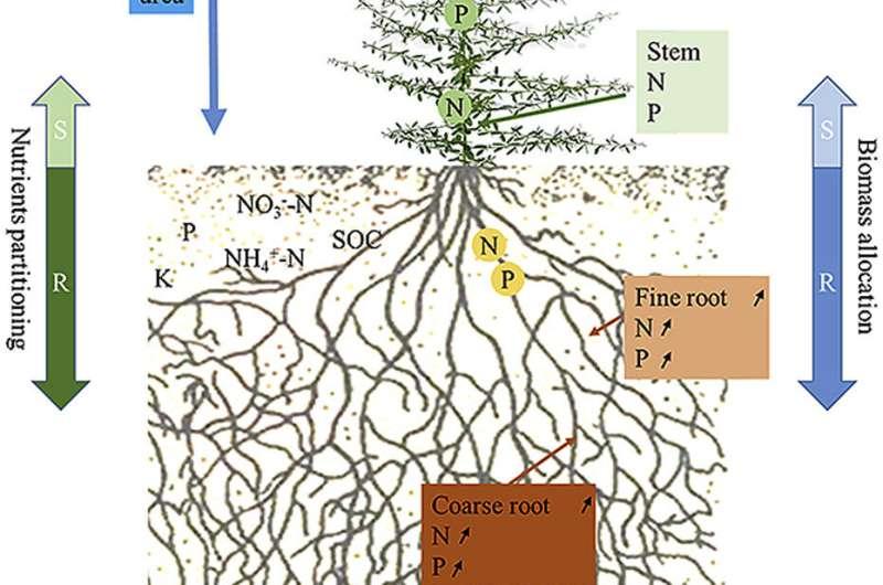 ¿Cómo responden las plantas del desierto a las variaciones de nitrógeno y agua en las regiones áridas?
