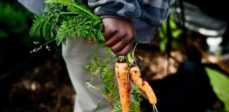 How planting a garden can boost bees, local food and resilience during the coronavirus crisis