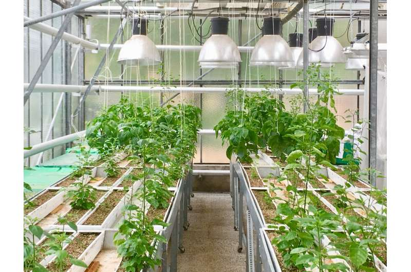 How plants compete for underground real estate affects climate change and food production