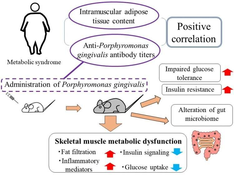 How poor oral hygiene may result in metabolic syndrome