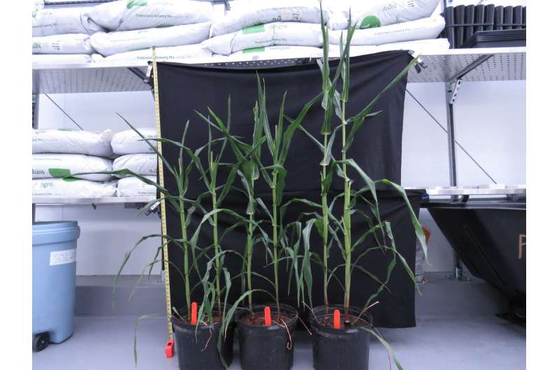 How soil microbes help plants resist disease