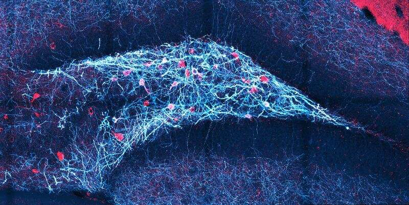 How the brain detects fine differences