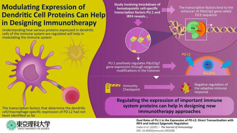 How the regulator is regulated -- Insight into immune-related protein holds therapeutic value