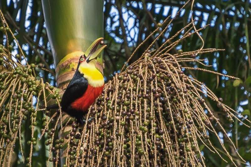 Human activity affects interactions between plants and seed-dispersing birds