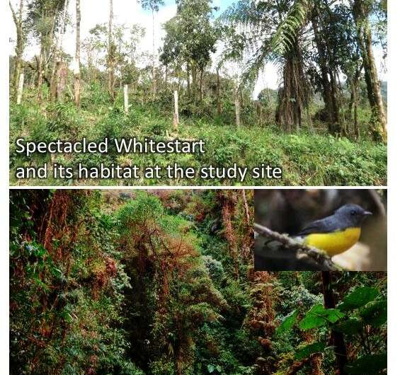 Human-made landscape promotes coexistence of two normally separated Andean warblers