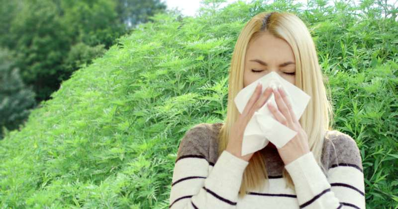 Humble bug holds key to relieving millions of allergy sufferers in Europe