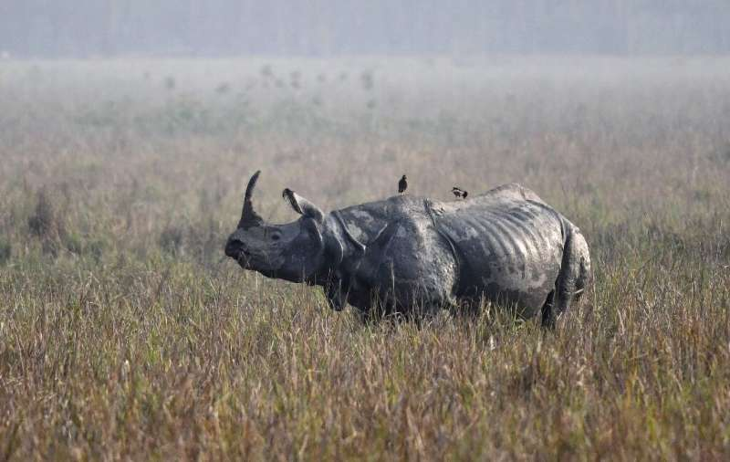 Hunting and habitat loss have slashed the number of one-horned rhinos to just a few thousand, almost all in the northeastern Ind