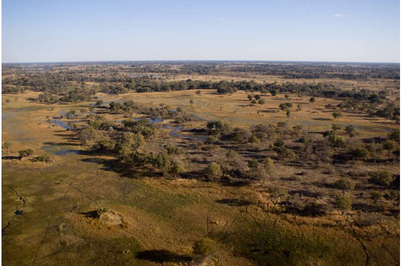 Hunting in savanna-like landscapes may have poured jet fuel on brain evolution