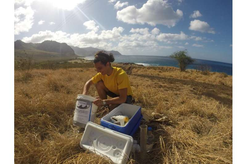 Hurricanes, heavy rains are critical for Hawai'i's groundwater supply