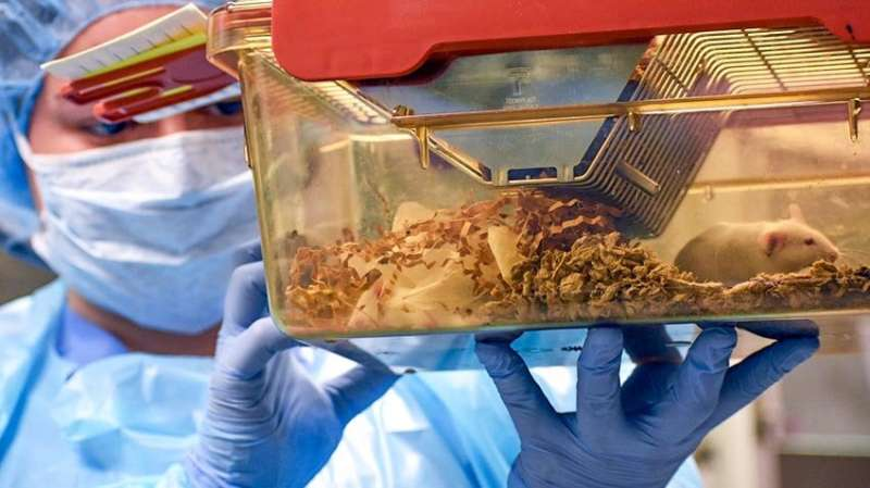 Identical mice, different gut bacteria, different levels of cancer