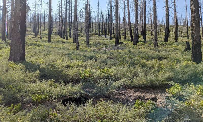 Identifying where to reforest after wildfire
