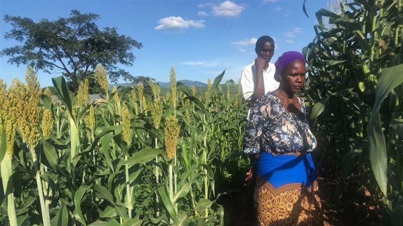 Improved yields in African project areas
