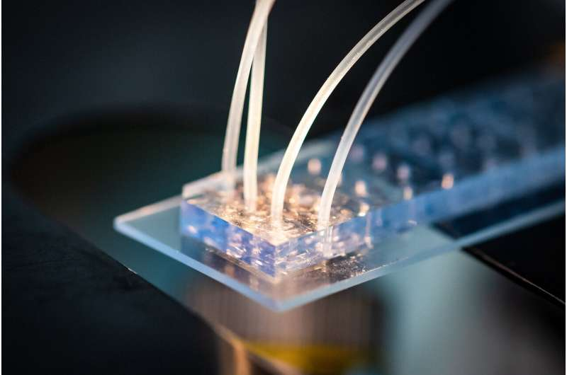 Improving European healthcare through cell-based interceptive medicine