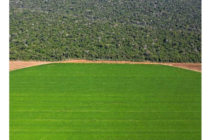 In Brazil's Sorriso region, soybean fields border the Amazon rainforest